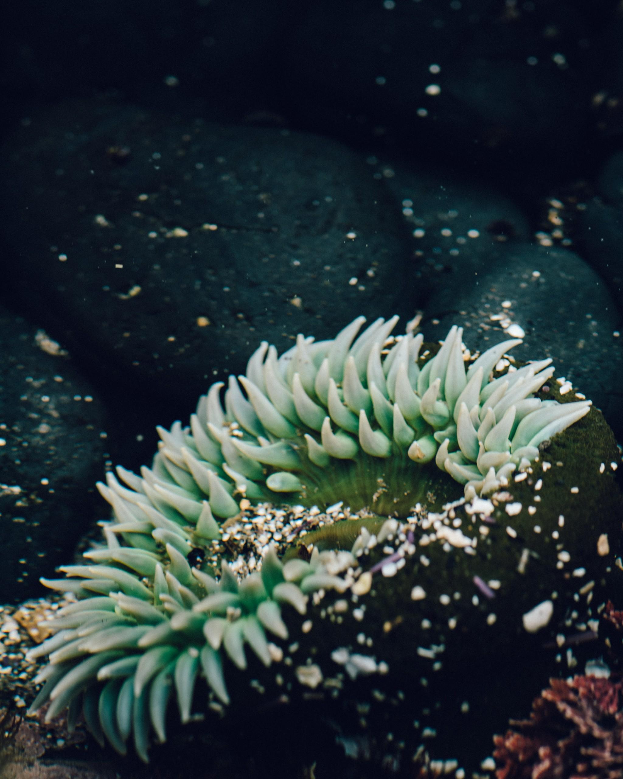 02-Underwater.jpg