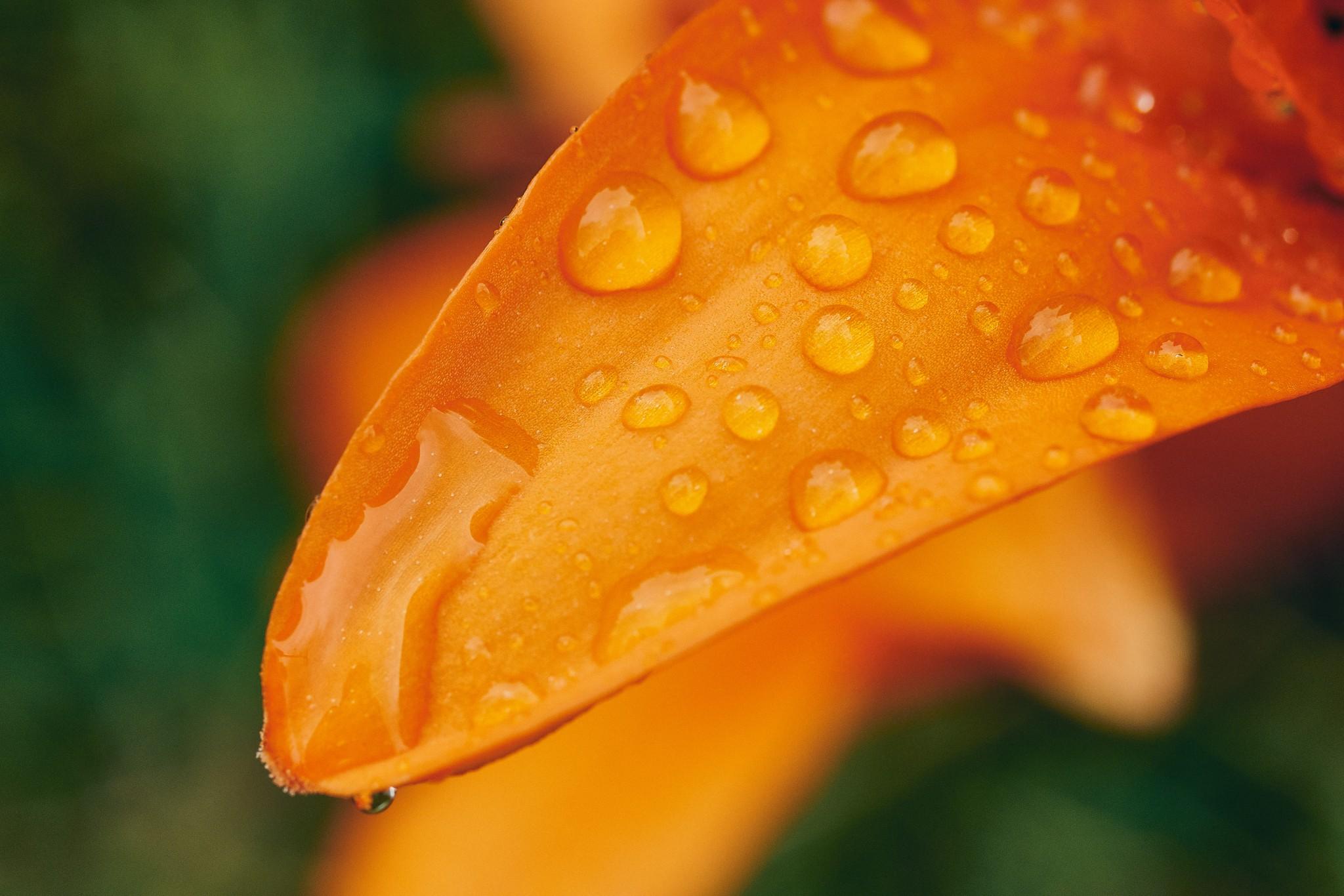June-Rains-2.jpg