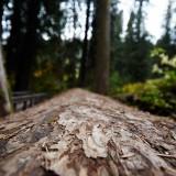 Mt-Rainier---Fallen-23