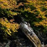 Mt-Rainier---Ohanapecosh-19