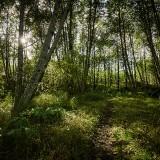 St-Helens-and-Hummocks-Trail---Hummocks-Trail-06