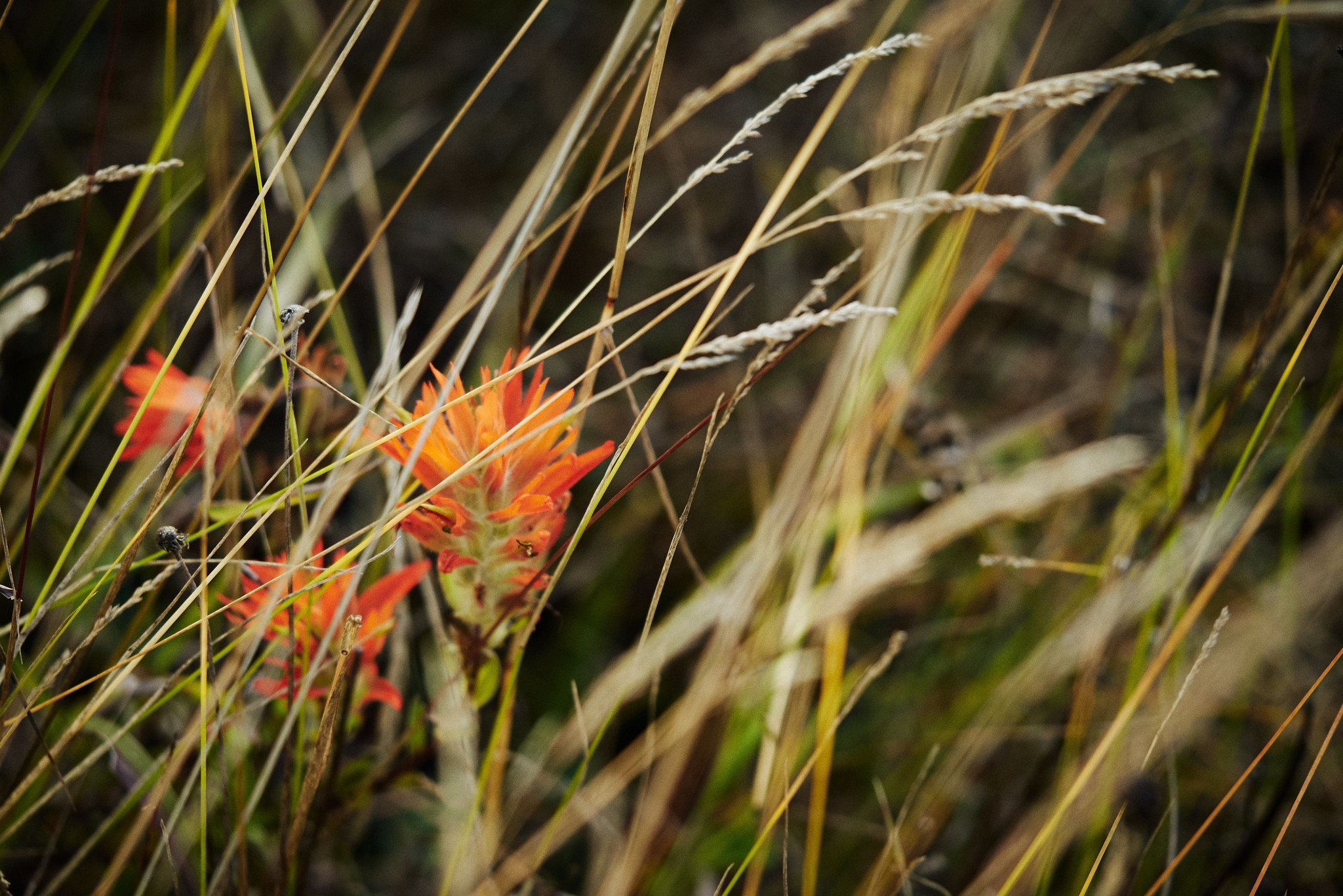 St-Helens-and-Hummocks-Trail---Mountain-Flower-04.jpg