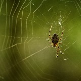 St-Helens-and-Hummocks-Trail---Spider-09