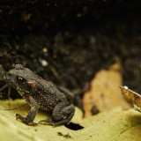 St-Helens-and-Hummocks-Trail---Toad-10