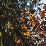 Lucia-Falls-in-Early-Fall---Oak-11