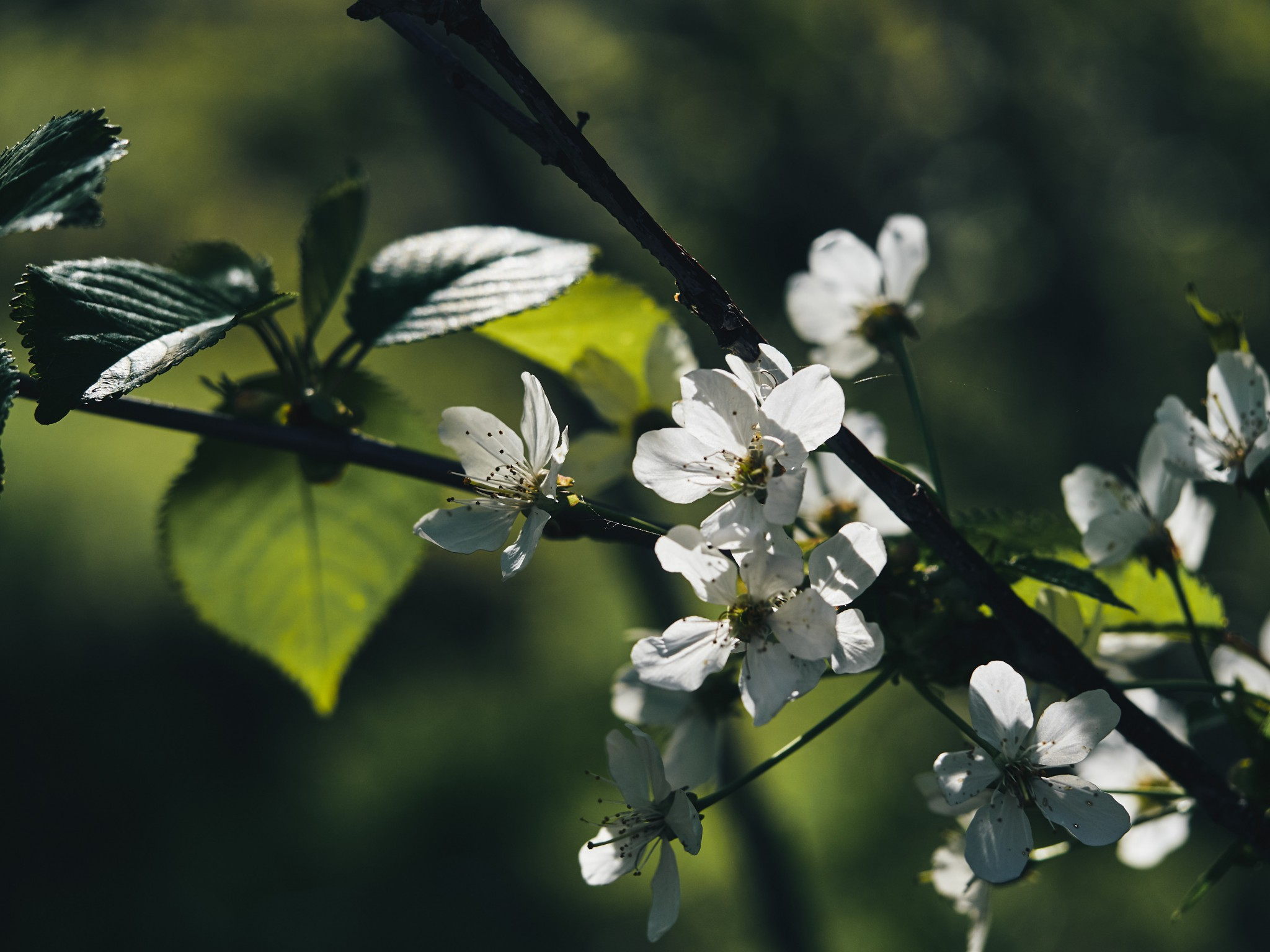 01-Apple-Blossom.jpg