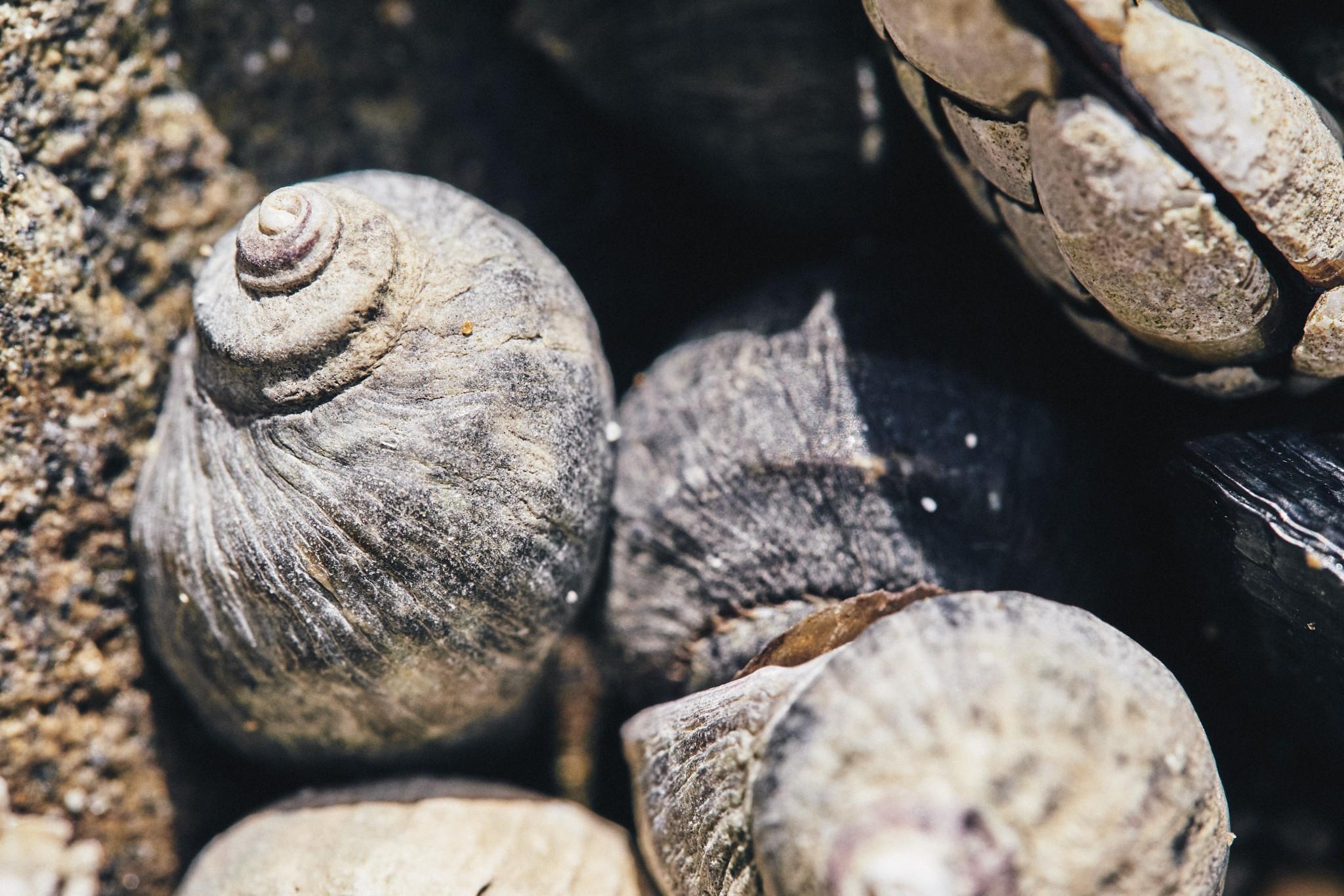 06-Sea-Snail.jpg