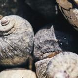 06-Sea-Snail