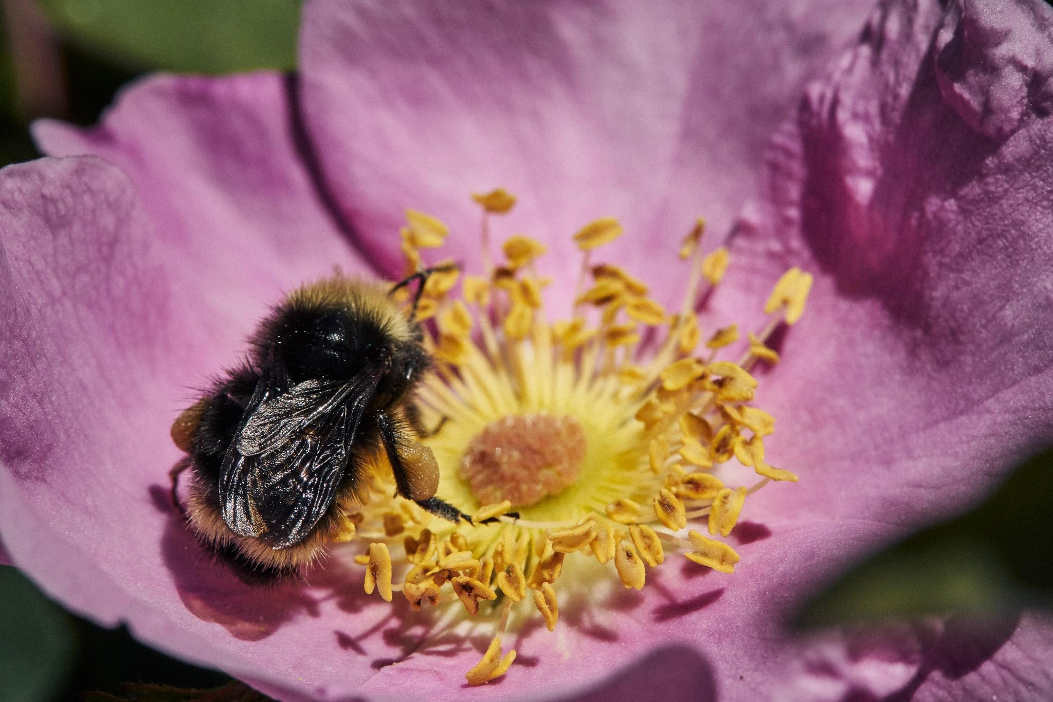 04-Bumble-Bee.jpg