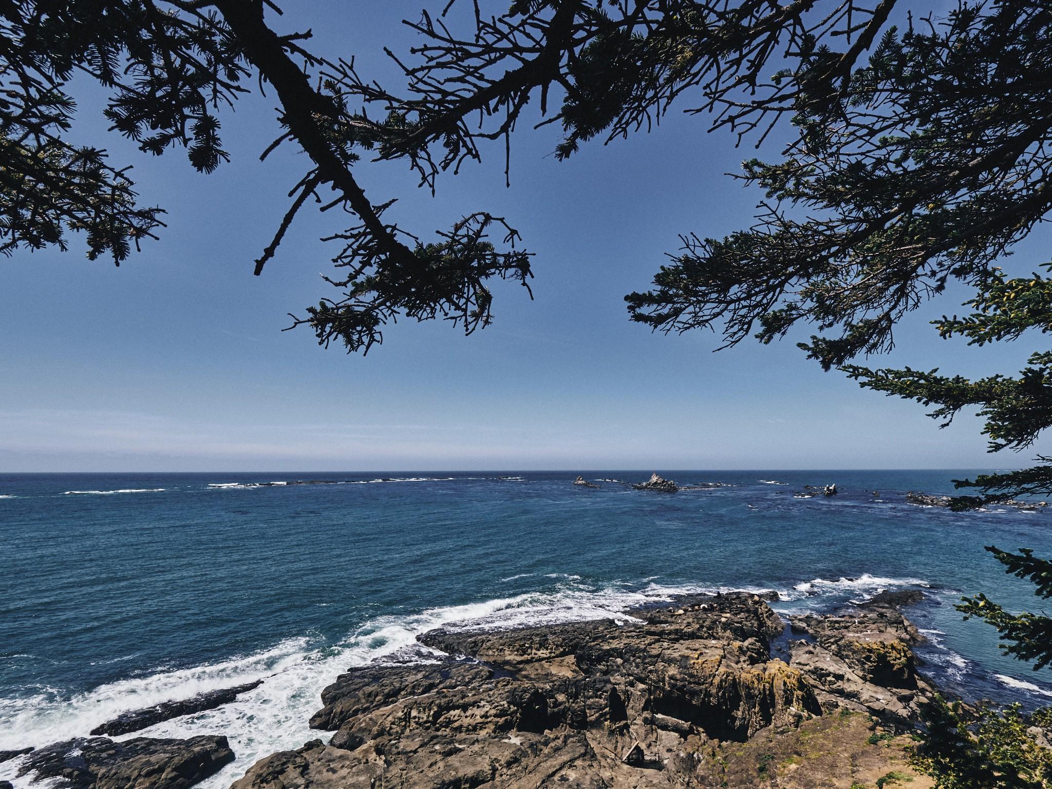 07-Cape-Arago.jpg