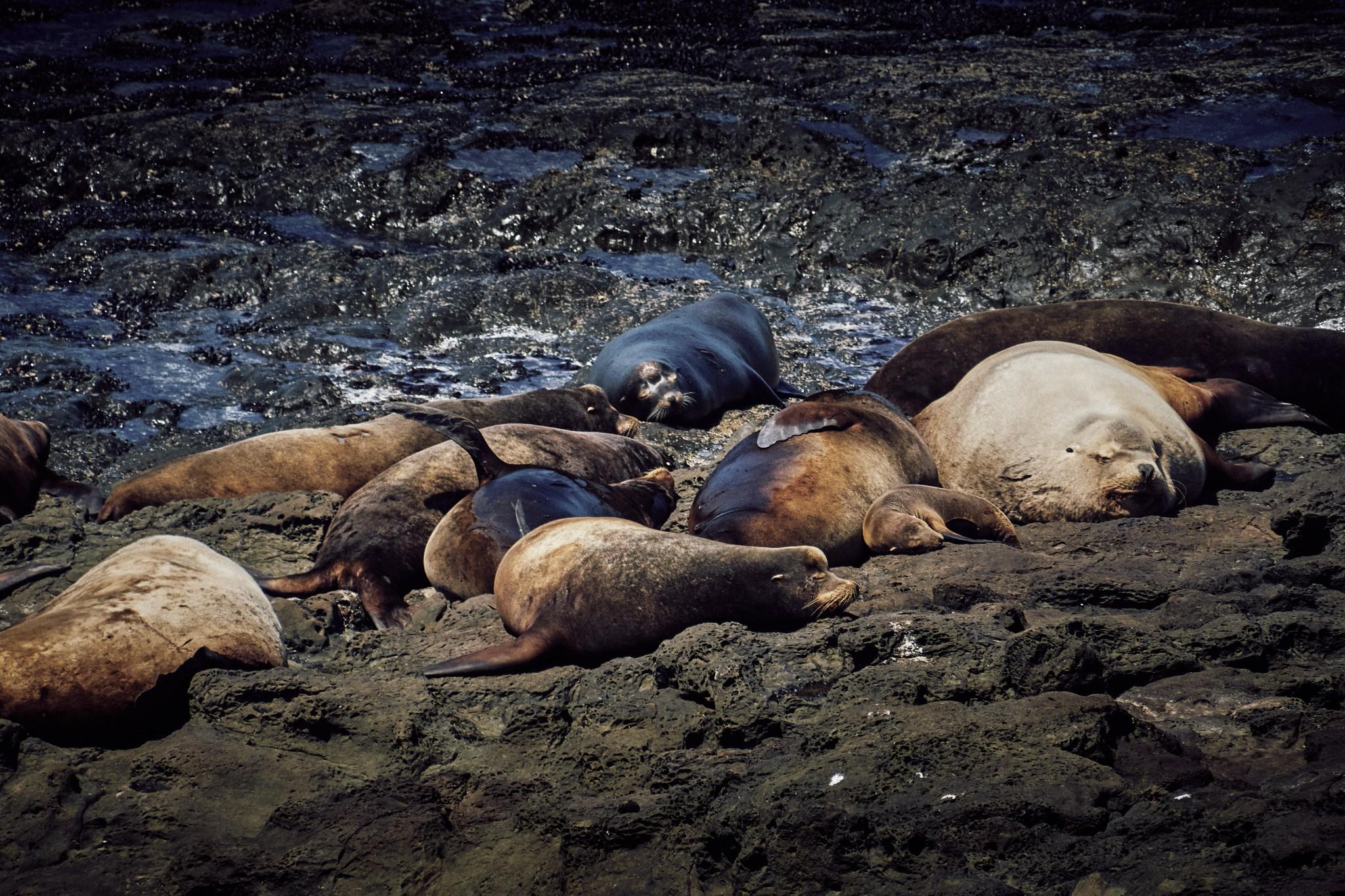 09-Sea-Lions.jpg
