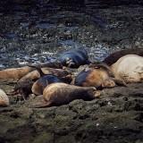 09-Sea-Lions