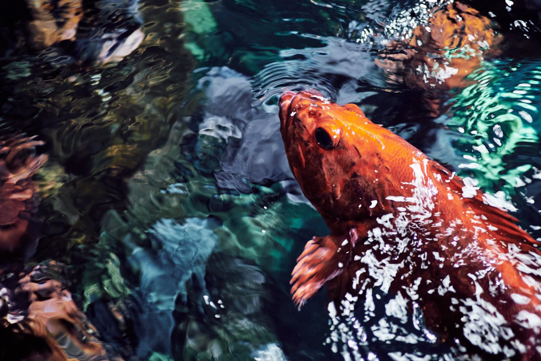 03-Rockfish.jpg