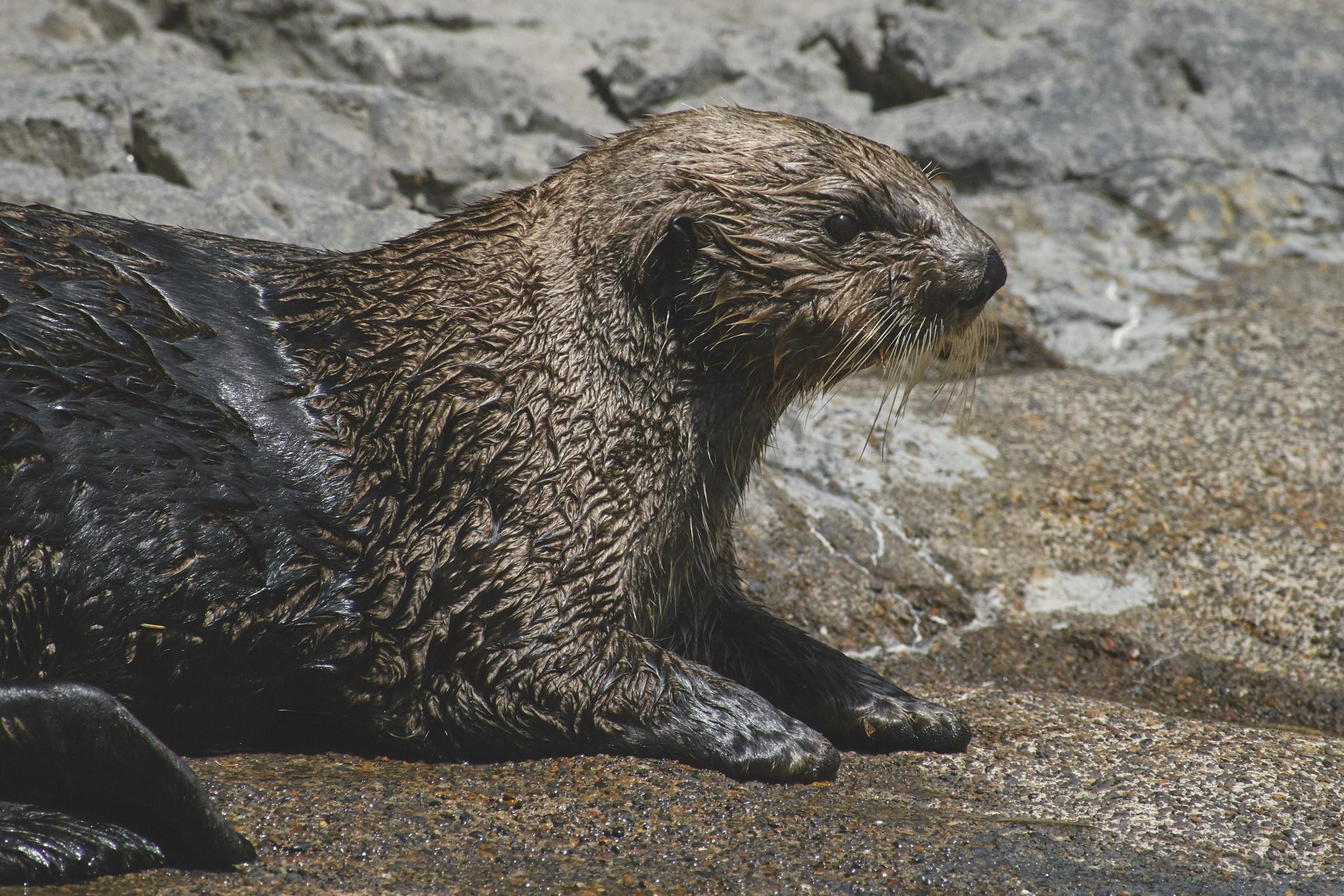 08-Sea-Otter.jpg