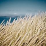 15-Sea-Grass