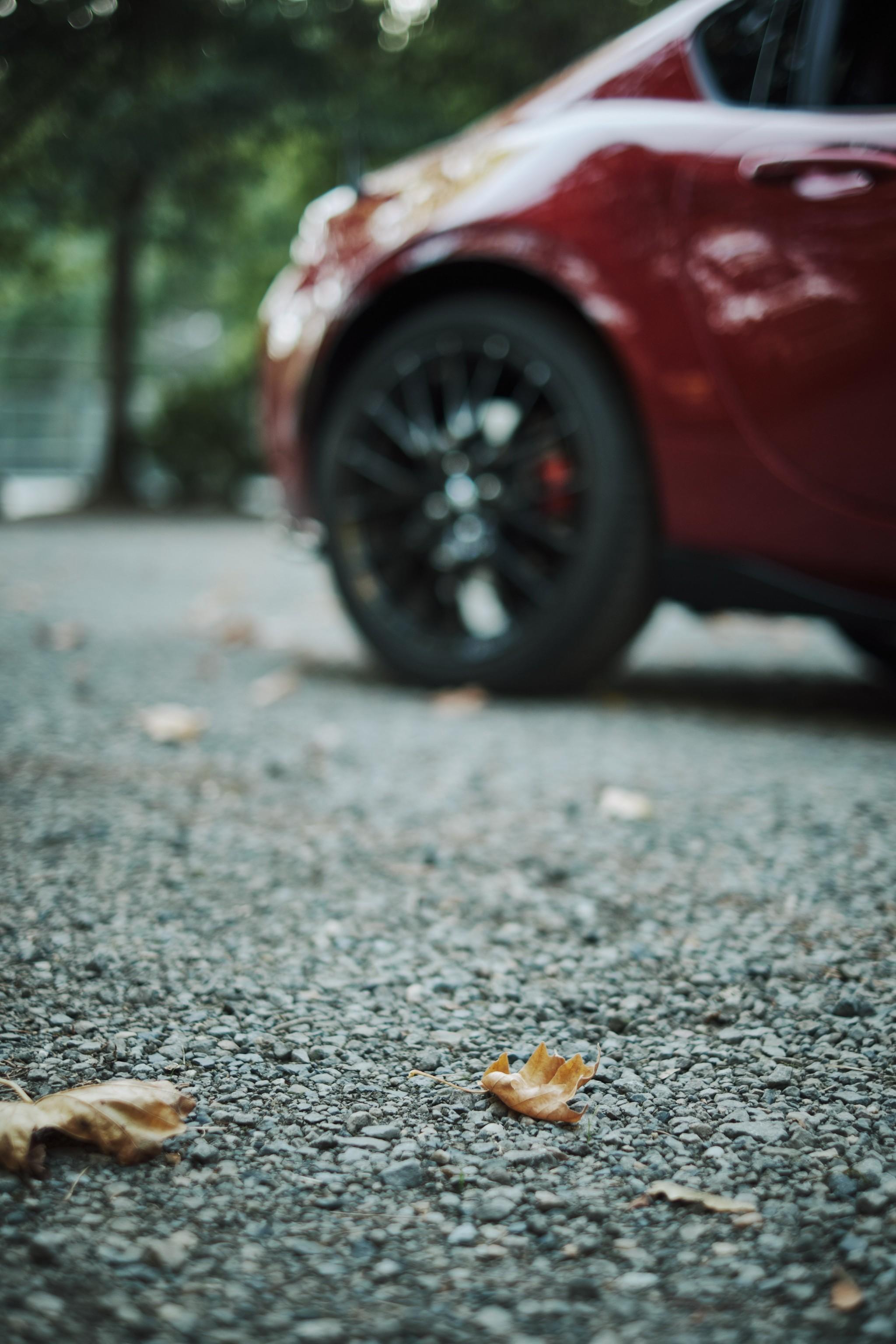 03-Oak-Leaf.jpg