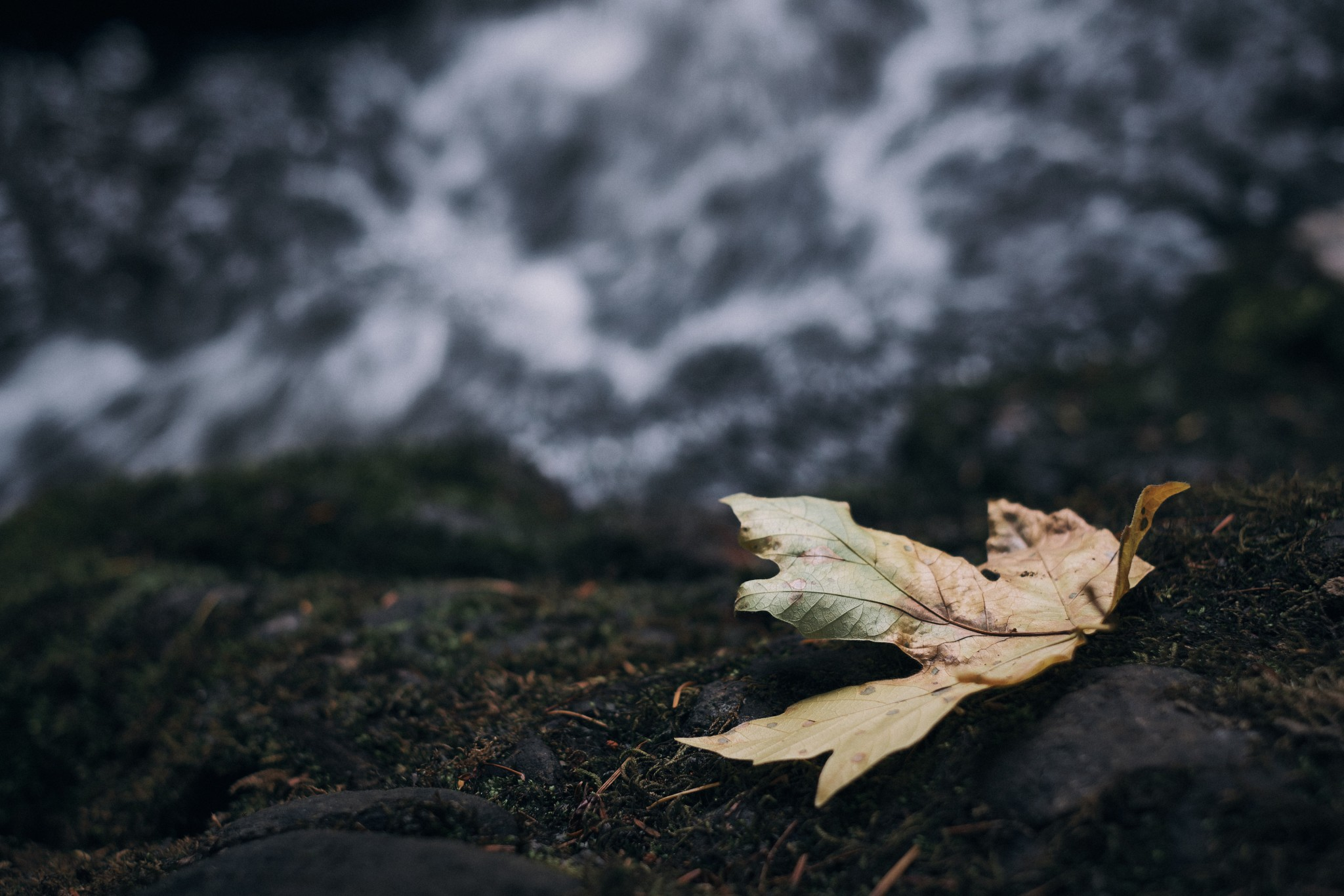 03-Fall.jpg