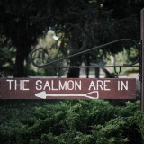01---The-Salmon-Are-In
