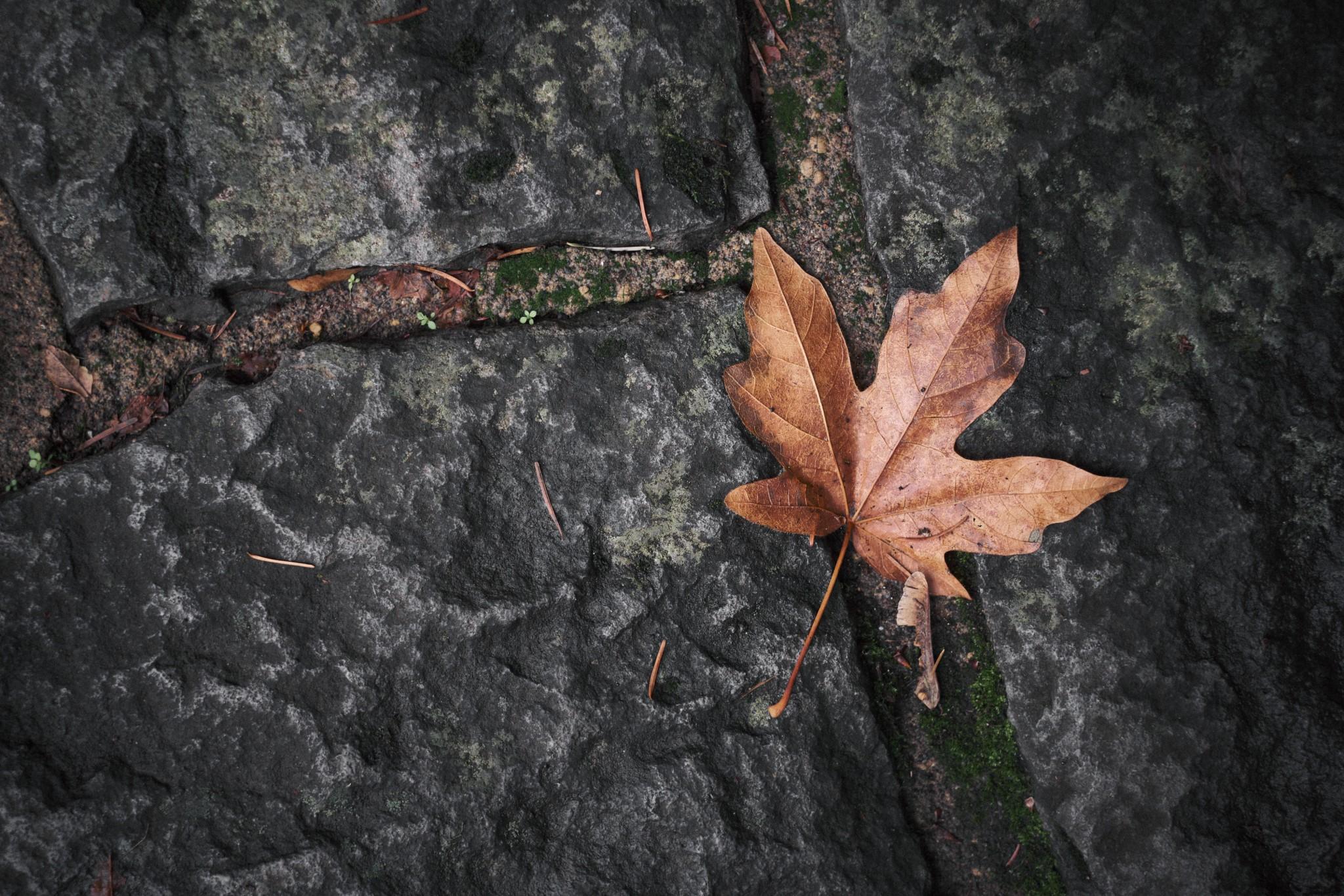 03---Leaf-Off.jpg