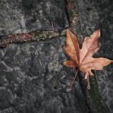 03---Leaf-Off
