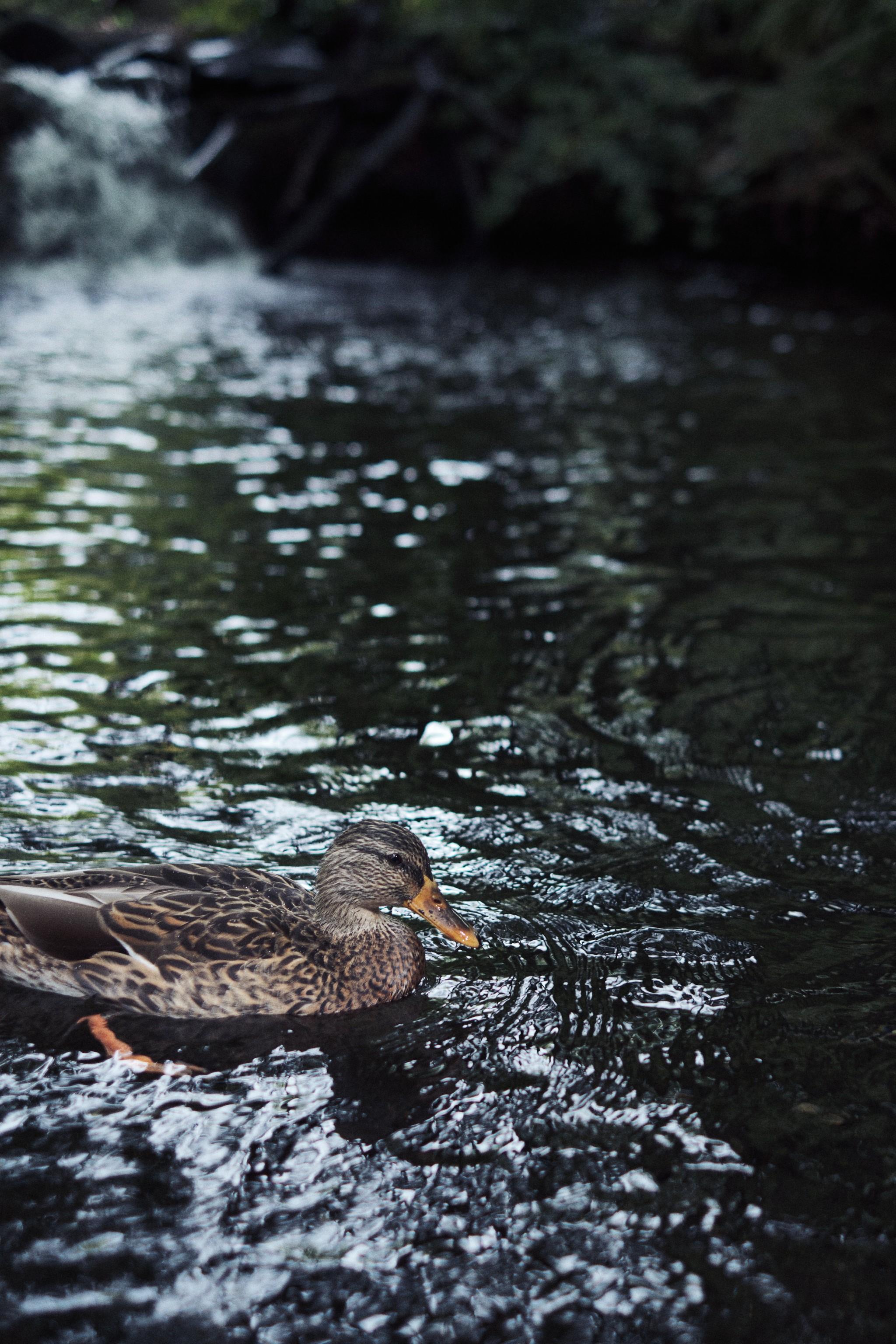 04---Duck.jpg
