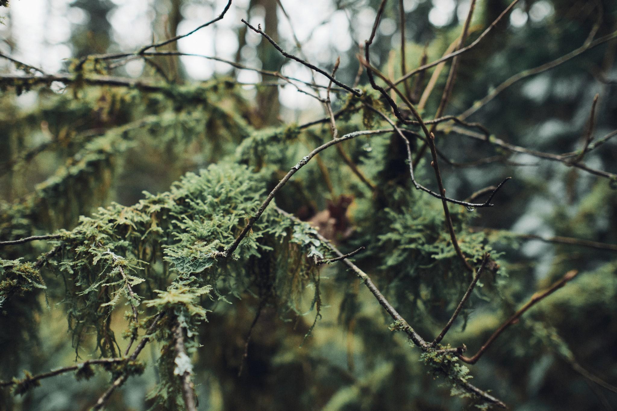 03-Moss.jpg