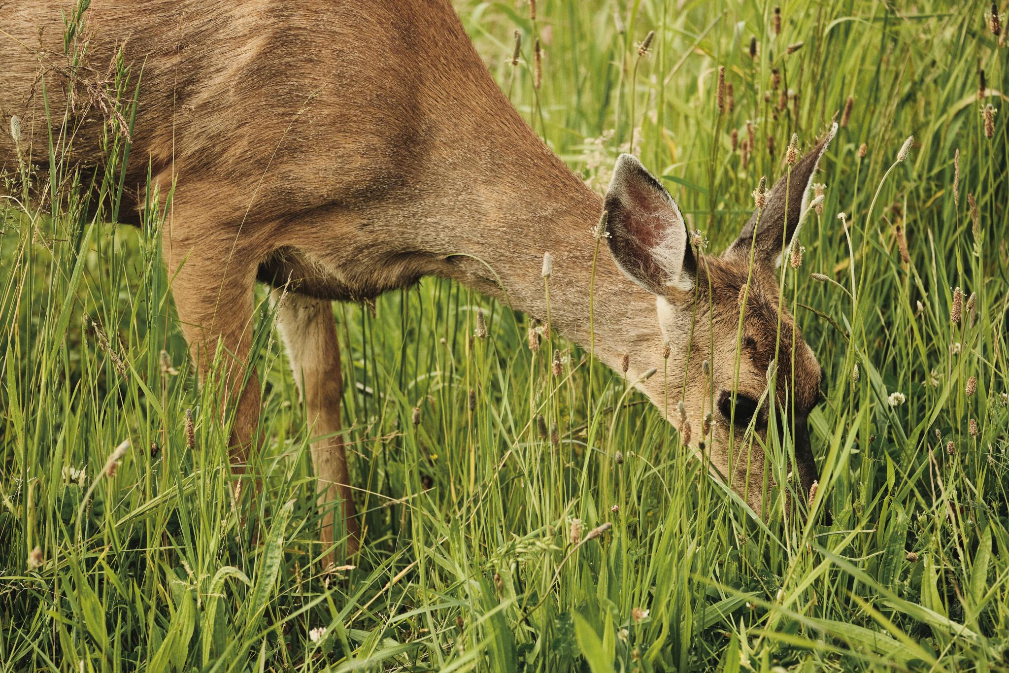04-Deer.jpg