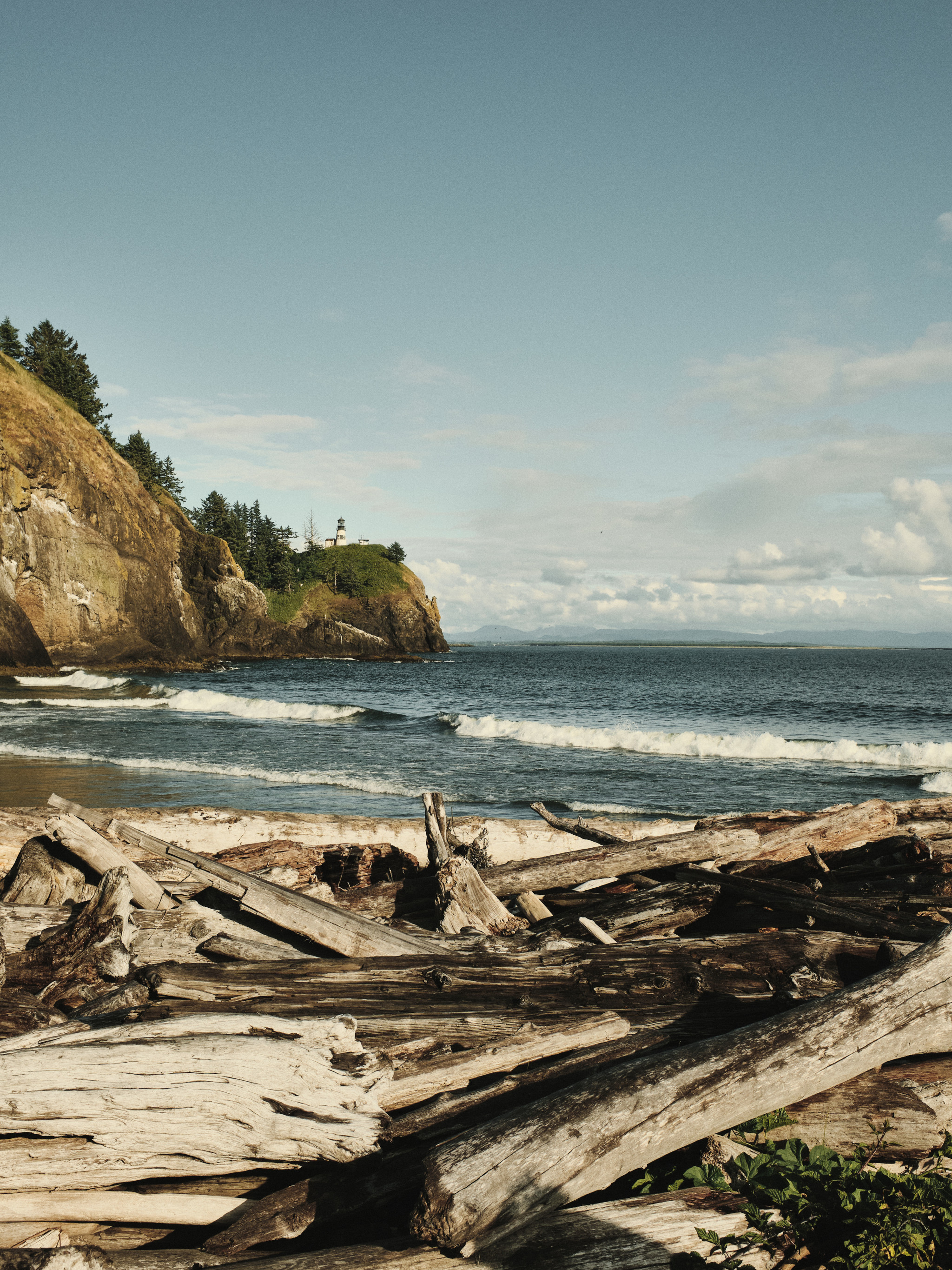 16-Driftwood.jpg