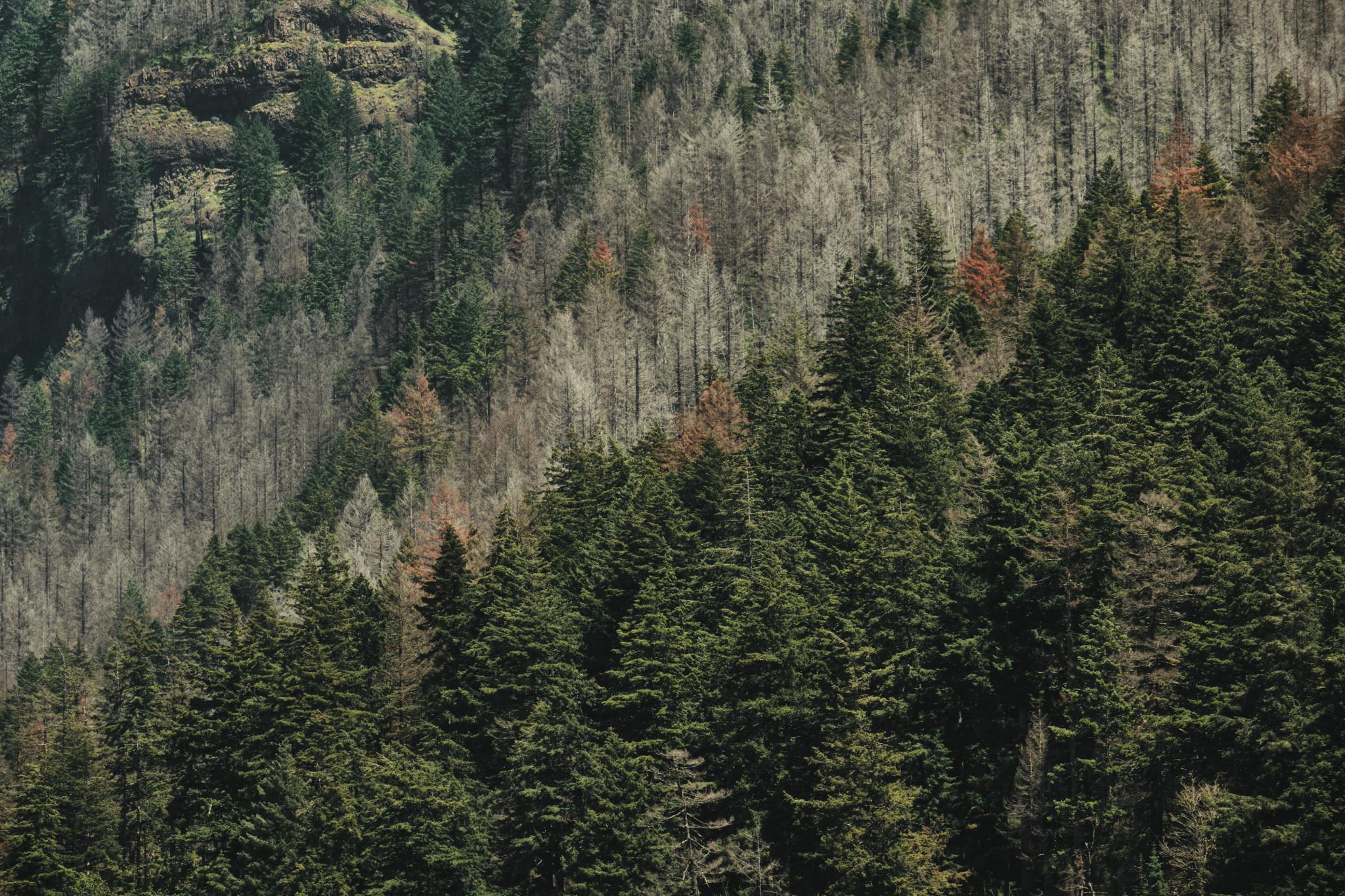 03-Cliffside.jpg