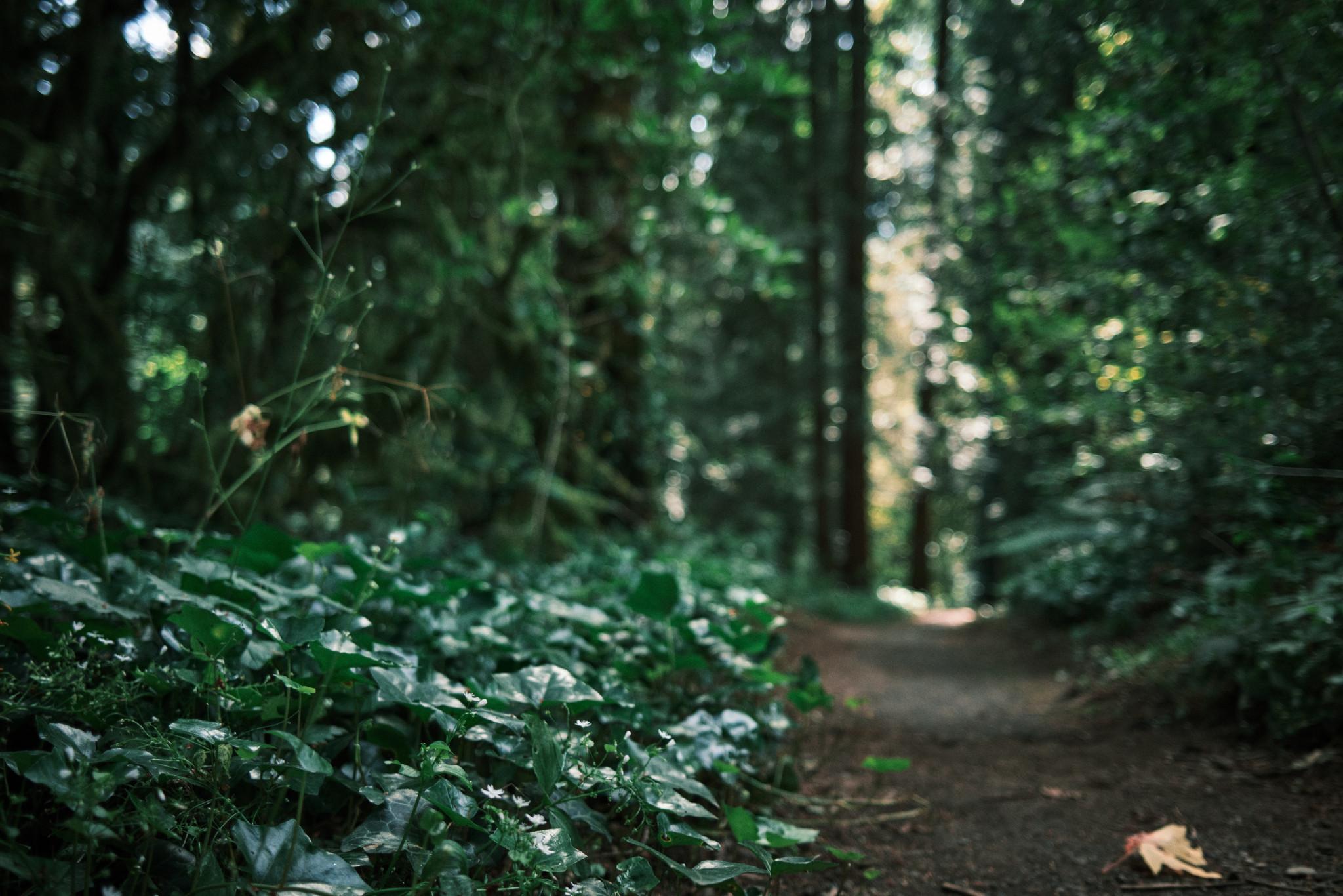 03-Path.jpg