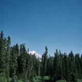 07-Mountain-Meadow