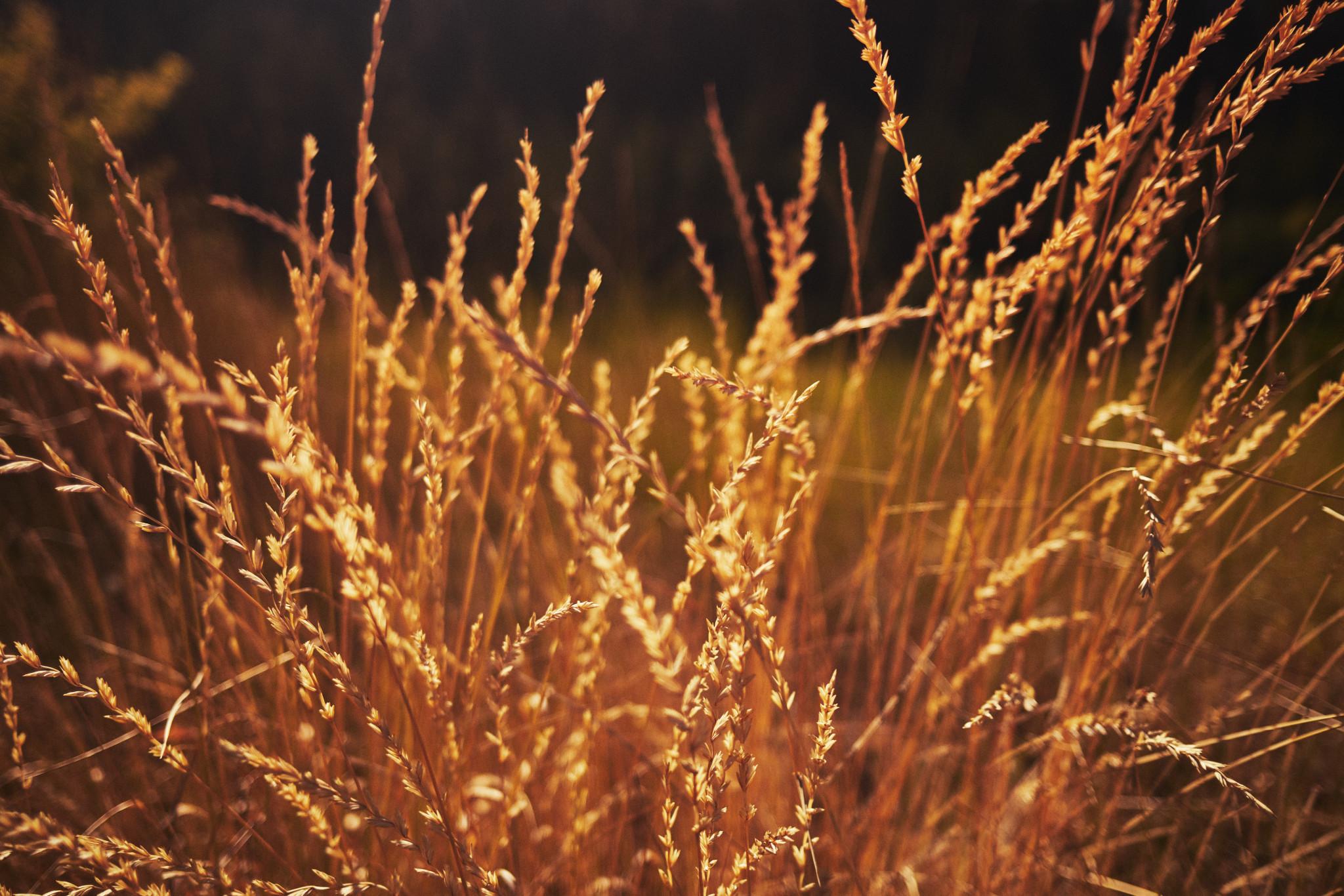 00-Grass.jpg