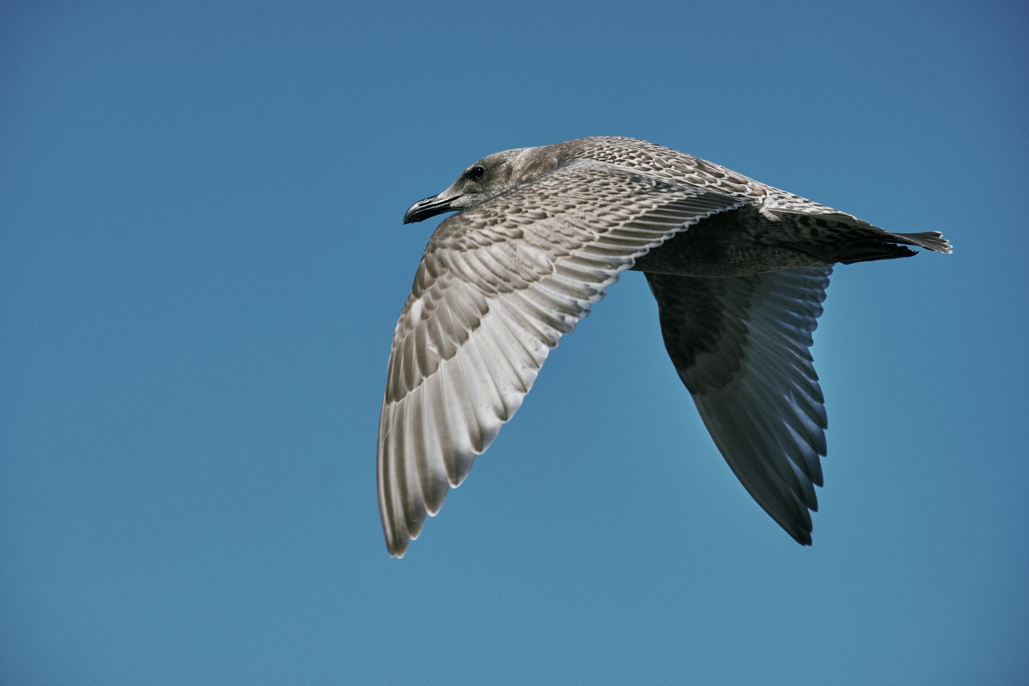 20-Seagull.jpg