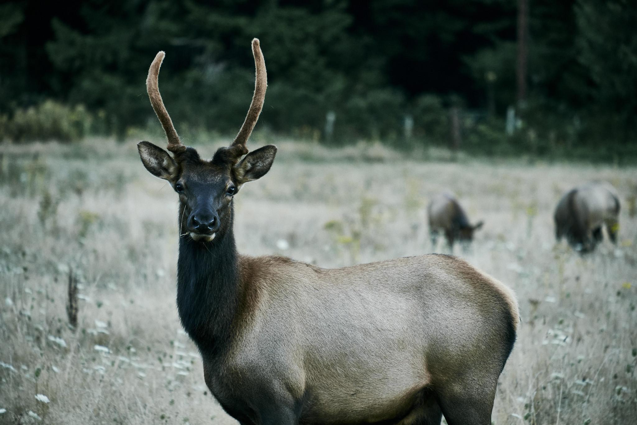 22-Elk.jpg