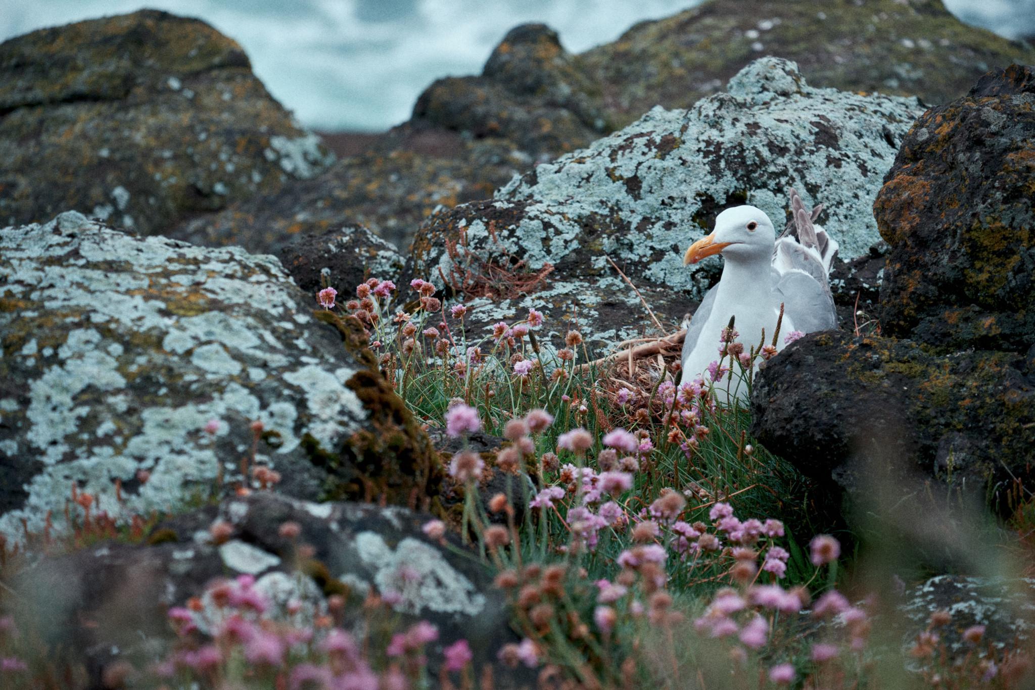 Gulls-Nest.jpg