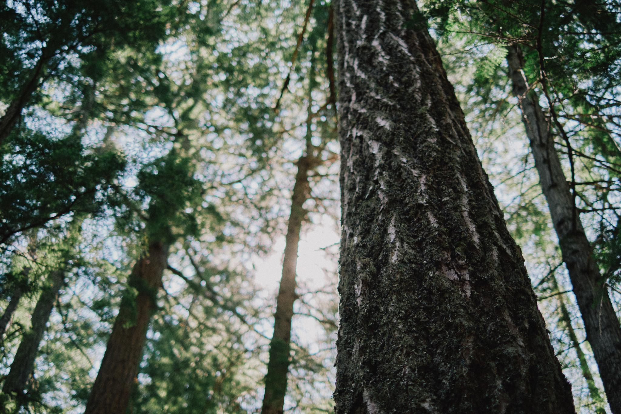 Forest-Floor.jpg
